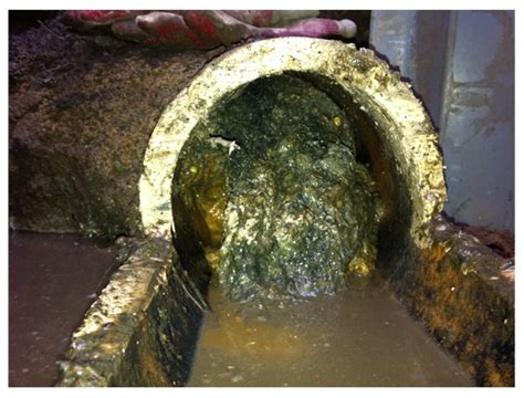 kitchen sink drain clogged with grease 3 undeniable steps for cleaner drains sanicon