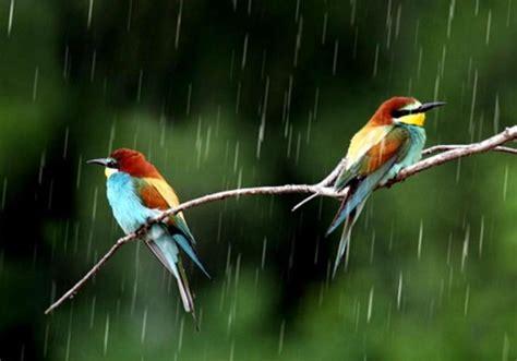 birds  monsoon season hd wallpapers  desktop