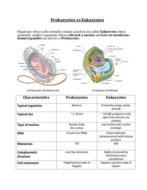 Collection Of Prokaryotes Vs Eukaryotes Worksheet Adriaticatoursrl