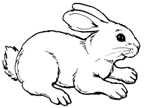 realistic rabbit coloring pages printable coloring pages