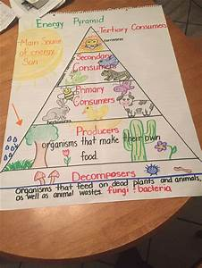 Food Chain Energy Pyramid 5th Grade Science Science