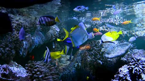 l aquarium de vannes aquarium de vannes