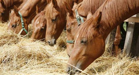 horse forage nutrition feeding rules basic base horses summer feed sacate