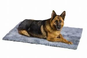 Tapis Grande Taille : le tapis pour chien grande taille est ici ~ Teatrodelosmanantiales.com Idées de Décoration