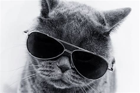 cat sunglasses cool cats wearing rismedia independent move blockchain automation reasons security why kitty kittens meows astrophe avoiding meow thinkstock