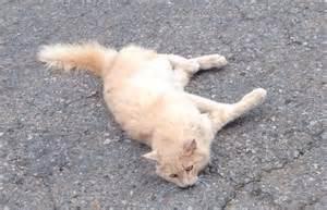 found a cat alpine ca lost cats breeds picture