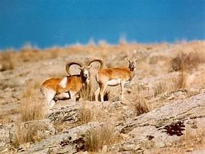 Sales Operations Circle H Ranch And Lodge Sheep Program Texas Hill