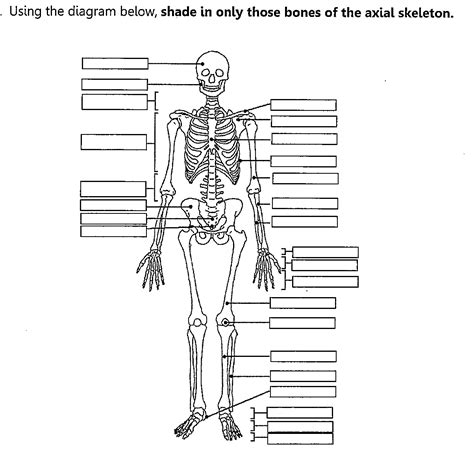 axial skeleton worksheet fill in the blank yahoo image