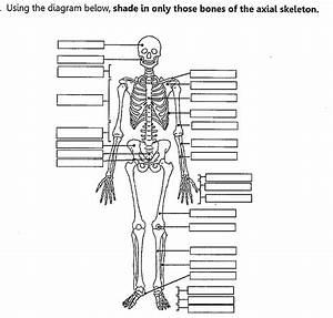 Musculoskeletal System Quiz