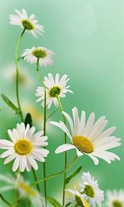 Free Beautiful Flowers images HD Wallpaper APK Download ...