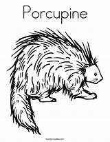 Porcupine Coloring Printable Animal Pages Preschool Twistynoodle Porcupines Crafts Outline Colors Noodle Mask Twisty Letters Built California Usa sketch template