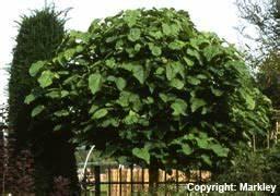 Bäume Für Kleine Gärten : gartenbaumschule krau laubb ume ~ Whattoseeinmadrid.com Haus und Dekorationen