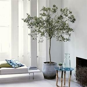 Olivenbaum Im Wohnzimmer überwintern : wei wohnzimmer mit olivenbaum mehr wohnung pinterest wei e wohnzimmer olivenbaum und ~ Markanthonyermac.com Haus und Dekorationen
