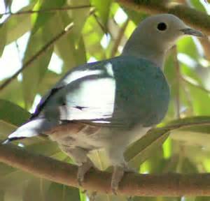 Southeast Asia Green Bird