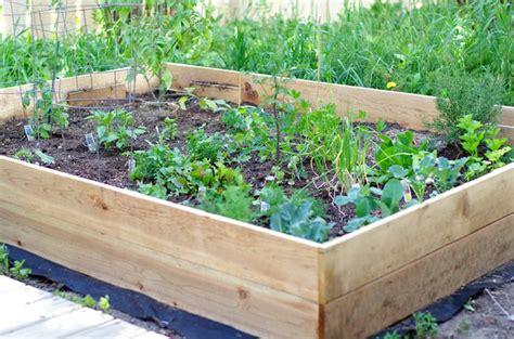 build a simple raised vegetable garden box raised garden