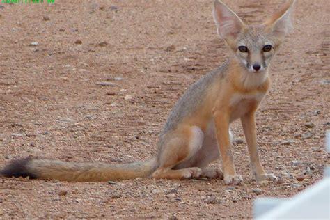 Lista De Animales En Extincion De Desierto Pictures To Pin