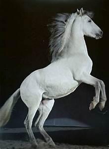 Au Cheval Blanc : cavalier au cheval blanc pour hommes battus histoire de france le blog la france pittoresque ~ Markanthonyermac.com Haus und Dekorationen