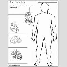Human Body Worksheet Worksheets