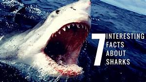 7 Interesting Facts About Sharks Youtube