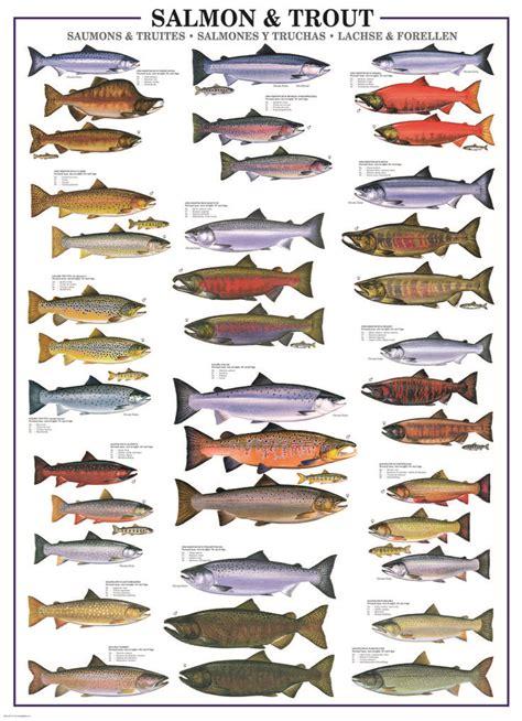 eurographics salmon trout  piece puzzle  puzzle