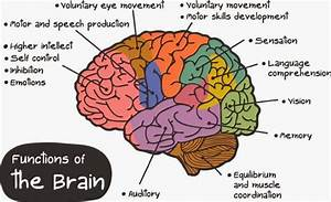 Brain Diagrams