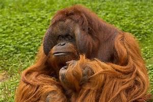 The hairy ape motifs