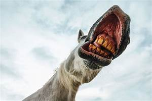 5 Facts About Equine Dentistry