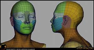 16 Best Head  Face Topology Images On Pinterest