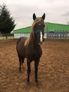 Heu Kaufen Für Pferde : biete offenstall f r sozialen verspielten wallach oder hengst in hersbruck pferdeboxen ~ Orissabook.com Haus und Dekorationen