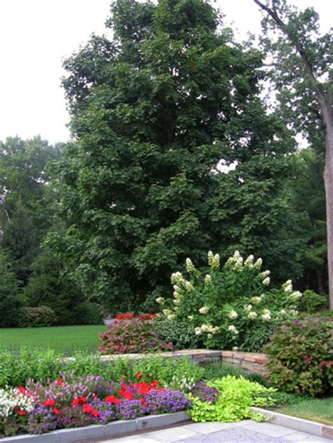 landscaping with trees ideas landscaping ideas for landscaping with trees and shrubs