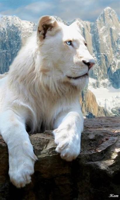 Animaux Lions Lion Funny Animal Animals Blanc