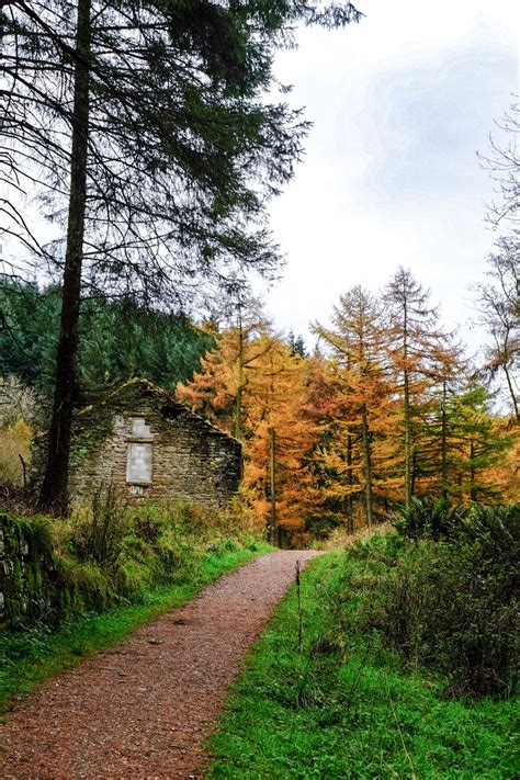 Macclesfield Forest - Love, from Scotland