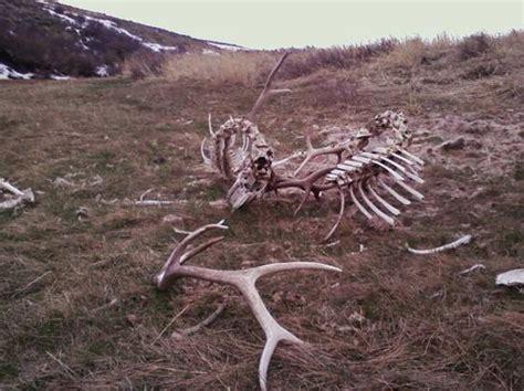 Elk Shed Utah by Lock Bulls Sheds Monstermuleys