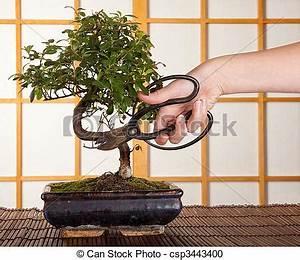 Bonsai Baum Schneiden : stock fotografie von bonsai schneiden hand schneiden a bonsai baum in csp3443400 ~ Frokenaadalensverden.com Haus und Dekorationen