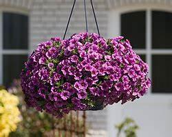 Makramee Garn Für Blumenampel : blumenampel pflanzen f r nassen boden ~ Frokenaadalensverden.com Haus und Dekorationen