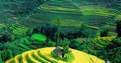 Amaze7: Rice terraces in Yuanyang Vietnam
