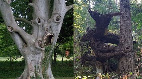 creepiest trees   world youtube