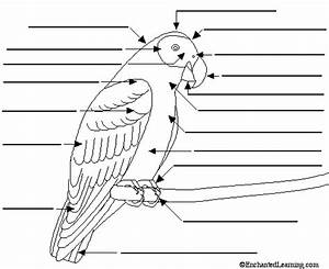 Label The External Bird Anatomy Diagram Printout