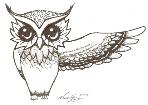 simple owl drawings drawings of owls owl owls bird wing drawing pictures