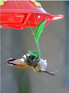 Vetsy's View: Hummingbirds.... beware!