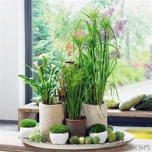 Pflanzen Für Innen : die besten 17 ideen zu wohnzimmer pflanzen auf pinterest ~ Michelbontemps.com Haus und Dekorationen