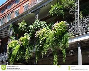 balkon farn garten lizenzfreie stockfotografie bild With französischer balkon mit farn für garten