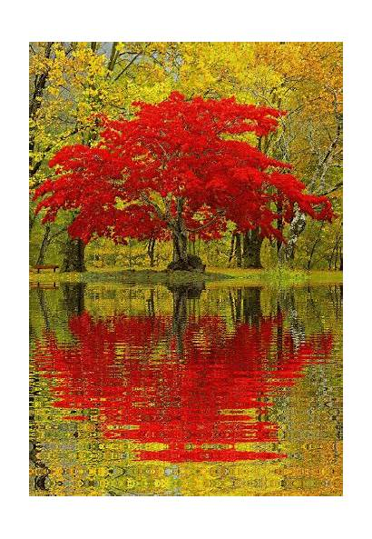 Nature Tree Taxi Water Reflection Animated Gifs