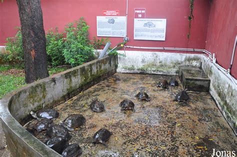 bureau de change gare lille europe enclos tortue terrestre exterieur 28 images la tortue