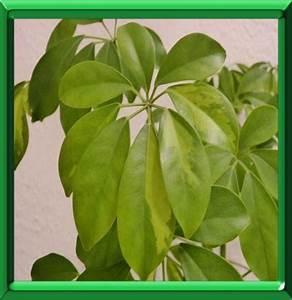 Plantes Vertes D Intérieur Photos : plantes vertes d 39 interieur en ete ~ Preciouscoupons.com Idées de Décoration