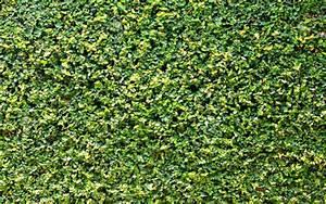 Jardines Verticales Huichol – 5 Plantas trepadoras para