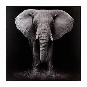 Black & White Elephant Canvas Art Print from kirklands com