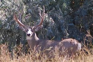 Monster Mule Deer Wallpaper - WallpaperSafari