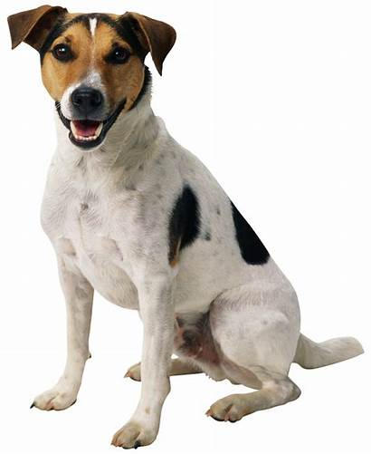 Dog Freepngimg