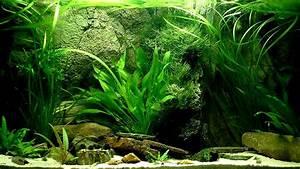 Fish Tank Background Aquarium Backgrounds Download Free Pixelstalk Net